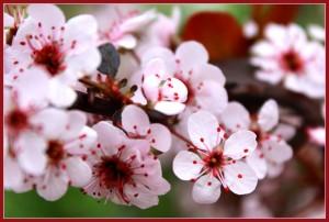 Spring Refreshed